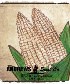 Corn - Sweet (White)