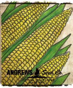 Sweet Corn (Yellow)