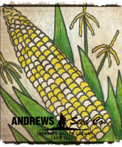 Sweet Corn (Bi-Color)